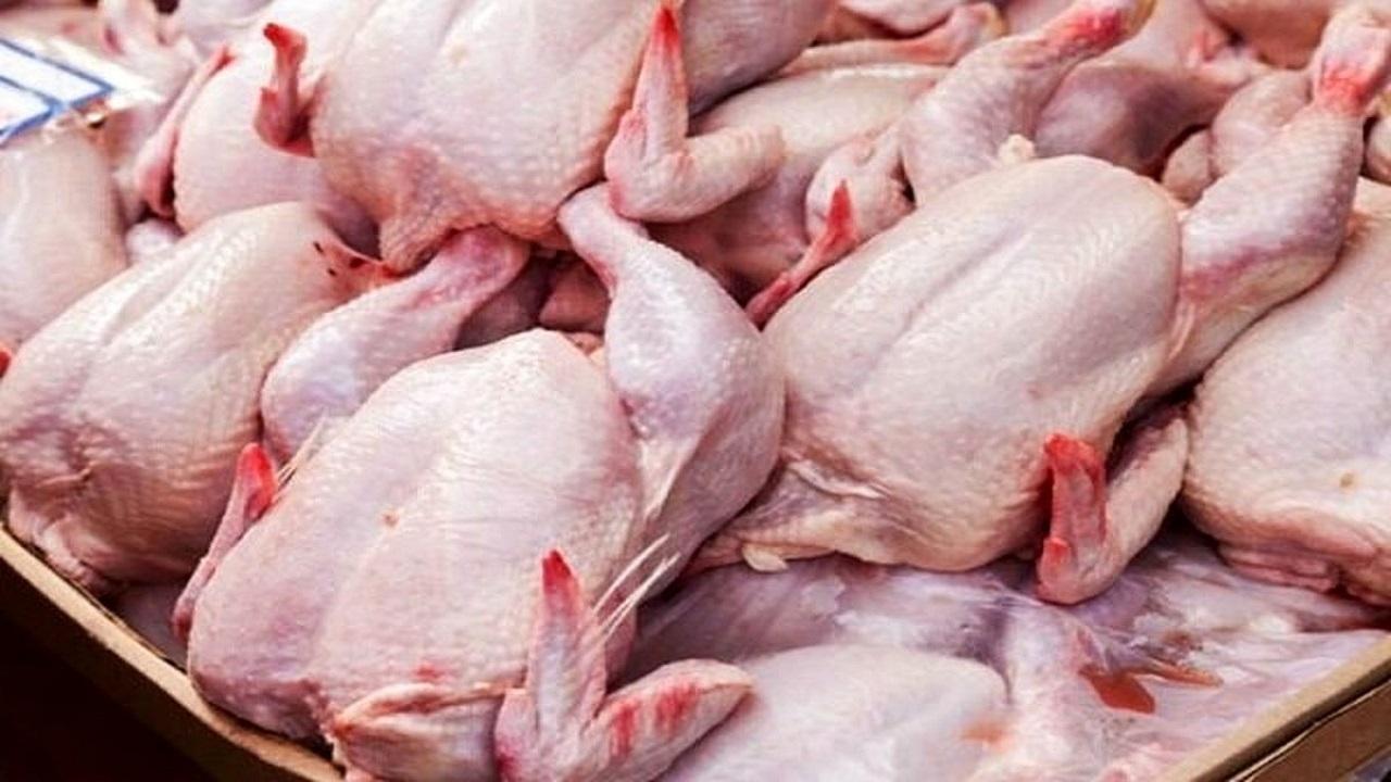 مرغ در تهران بیشتر توزیع می شود+ جزئیات