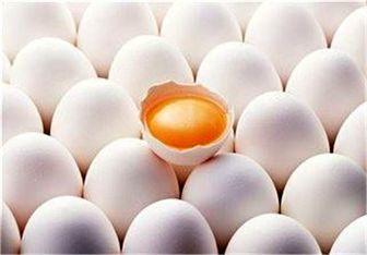 کاهش «تعرفه واردات» بالاخره قیمت تخممرغ را شکست