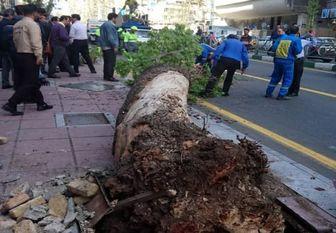 علت سقوط درخت در ولیعصر تهران
