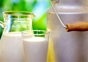 مصرف شیر گاو برای رفع وسواس و فراموشی