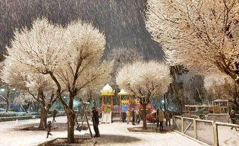 پاکسازی معابر اصلی و بزرگراه های پایتخت در اولویت برف روبی