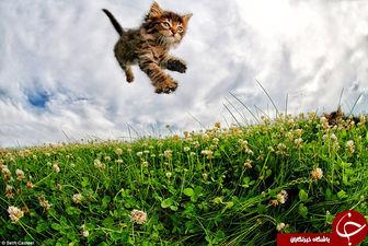 گربه های پرنده به روایت تصویر