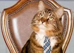 گربه ای که نامزد انتخابات شد! + عکس
