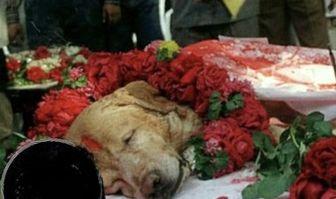 تشییع جنازه باشکوه برای حیوان فداکار+عکس