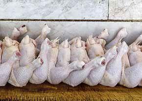 کاهش قیمت گوشت مرغ برای ماه رمضان