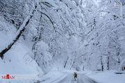 وضعیت جاده جنگلی عباسآباد پس از برف/ عکس