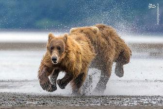 خرس این مادر و دخترش را درید ! + عکس