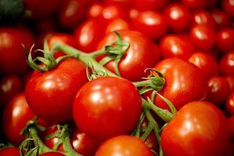 کشف بیش از ۲۲ تن گوجه فرنگی توسط ماموران گمرک