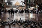 اولین بارش باران پاییزی در نجف/ گزارش تصویری