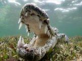 کروکودیلها را از نزدیک ببینید + تصاویر