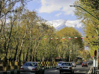جایگزینی بیش از ۳ هزار درخت چنار در خیابان ولی عصر