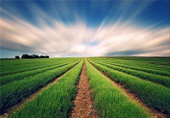دور زدن قانون خرید تضمینی۲۵ قلم محصول کشاورزی
