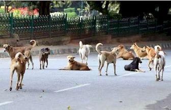 حمله گسترده سگ ها در پکن