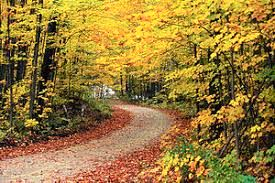 فصل رنگ ها/ عکس