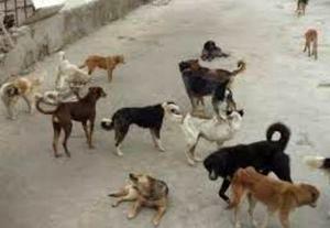 هزینه ۴۰۰ هزار تومانی جمعآوری هر قلاده سگ برای شهرداری تهران