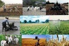 اولویتهای کشاورزی در دولت جدید چه باشد؟
