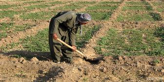 افزایش قاچاق خاک زراعی به نام شن و ماسه