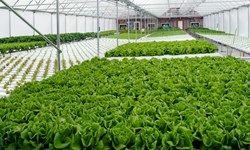 امکان ارتقای تولید و توسعه صادرات محصولات کشاورزی بدون برنامه وجود ندارد