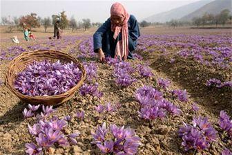 جولان دلالان مرزی در بازار زعفران