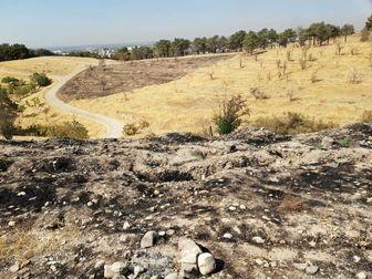 سوء مدیریت دلیل خشک شدن درختهای پارک چیتگر
