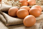 کدام قسمت تخم مرغ پروتئین بیشتری دارد؟
