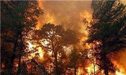 ادامه آتشسوزی در بزرگترین رویشگاه درختان گال در لرستان