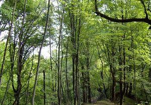 50 هکتار از جنگل های هیرکانی برای ساخت سد شفارود به زیر آب رفتند