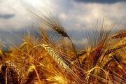 موج ممنوعیت جهانی صادرات مواد غذایی فرونشست