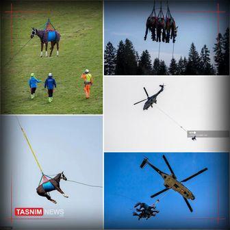 حمل اسب با بالگرد ارتش / عکس