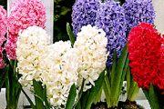 چه گلدان سنبلی بخریم؟