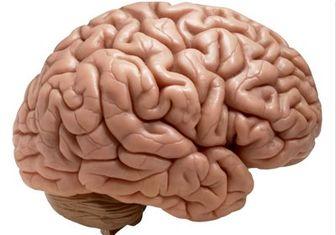 کشف ساختار اینترنتی مغز