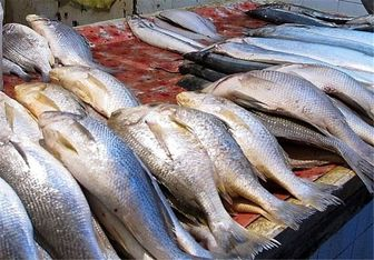 هجوم عراقیها برای خرید ماهیهای جنوب کشور