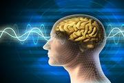 خوراکیهای پرطرفداری که مغزتان را هدف قرار میدهند