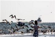 آلودگی بیش از حد مجاز  سواحل بندرعباس