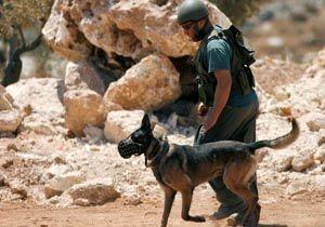 استفاده داعش از 600 سگ انتحاری