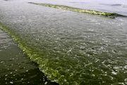 دریای بندرعباس سبز شد/ عکس