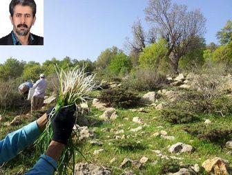 گیاهان خوراکی و دارویی ارتفاعات زاگرس و خطر انقراض آنها