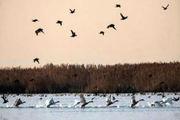 جدال پرندگان در آسمان/ عکس