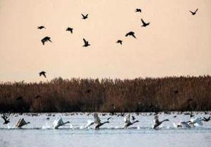 صدور مجوز شکار در زمان شیوع بیماری آنفلوآنزای فوق حاد پرندگان ممنوع می شود