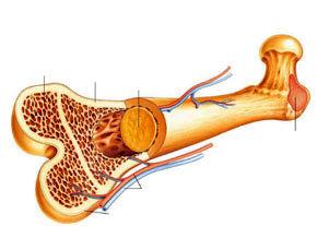 موثرترین راه های تقویت استخوان ها