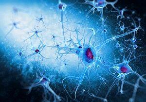 آیا مغز قادر به تغییر دادن اطلاعات ذخیره شده است؟