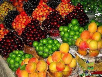 آخرین وضعیت عرضه و قیمت میوههای تابستانه در بازار
