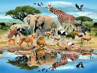 چرا خداوند حیوانات را آفرید؟
