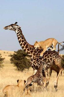 نبرد دیدنی مادر و فرزند با سلطان/ عکس