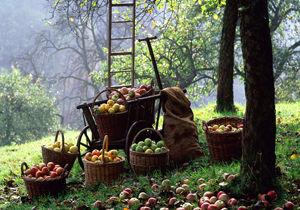 اعلام تورم کالاهای زراعی و دامی/ رشد 4 درصدی تورم انواع میوه