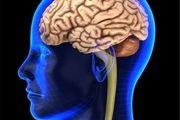 گیاهان دارویی که سلامت مغز را تضمین میکنند!