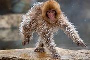برندگان مسابقه عکاسی کمدی حیوانات/ گزارش تصویری