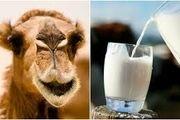 جوانی را با شیر شتر به خود ارزانی کنید /کمک به کنترل دیابت و بهبود حساسیت به انسولین