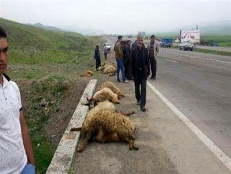 تلف شدن 25 رأس گوسفند بر اثر تصادف در اصلاندوز+عکس