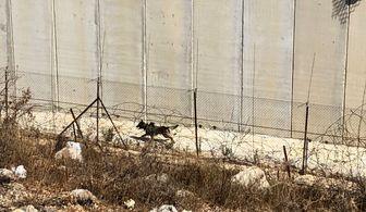 نصب حصار آهنی در مرز میان فلسطین اشغالی و لبنان